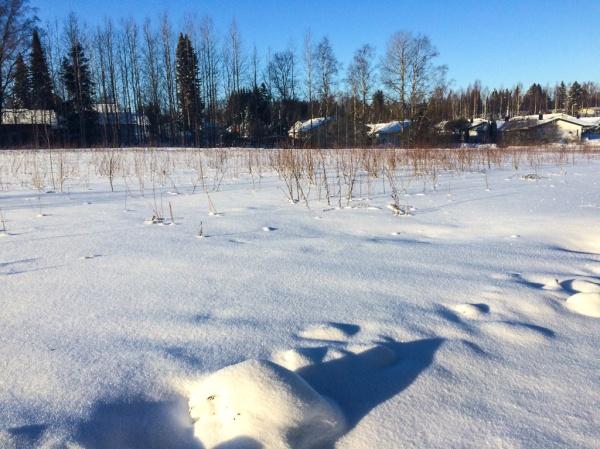 Blogger in winter